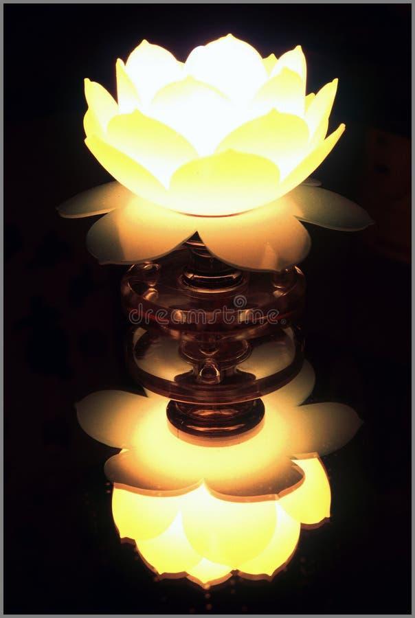 De Lamp van Lotus stock foto