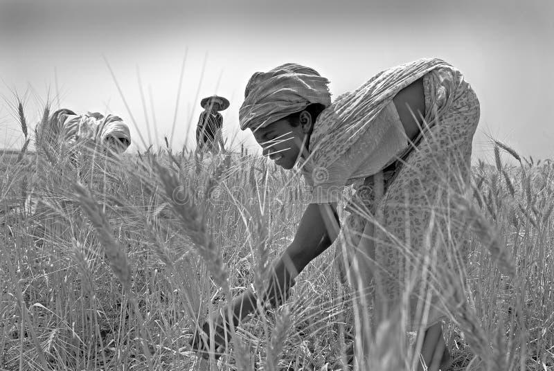 De landbouw in een land. stock afbeelding