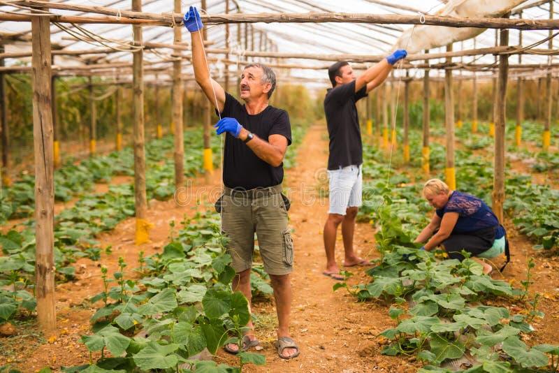 De landbouw, het tuinieren, landbouw en mensenconcept - gelukkige familie die aan installaties of komkommerzaailingen bij landbou stock fotografie