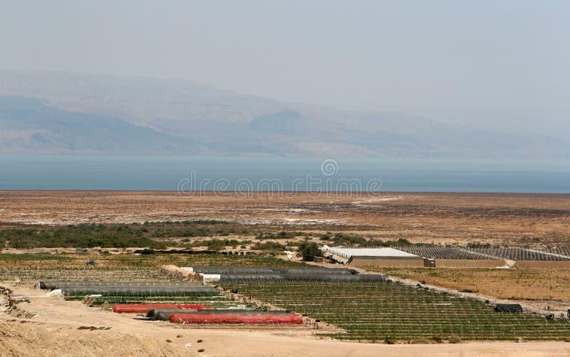 De landbouw in Israël stock foto