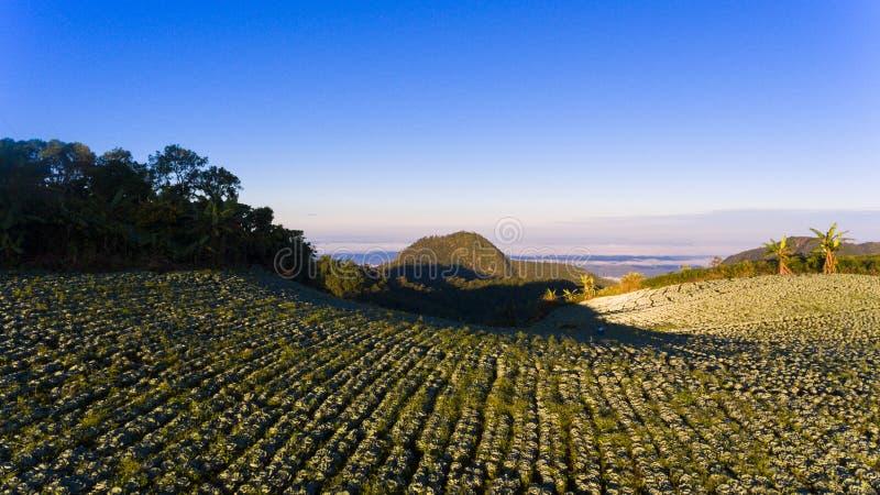 De landbouw op de heuvel stock afbeeldingen