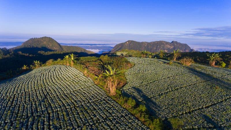 De landbouw op de heuvel royalty-vrije stock fotografie