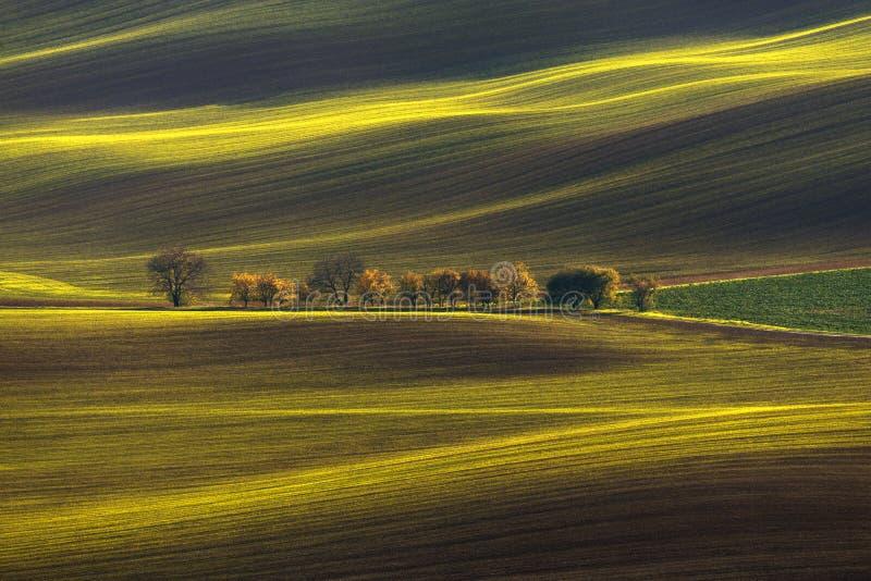 De landbouw Rolling Lente/Autumn Landscape Natuurlijk Landschap in Bruine en Gele Kleur Gegolft Gecultiveerd Rijgebied met Beauti stock afbeelding