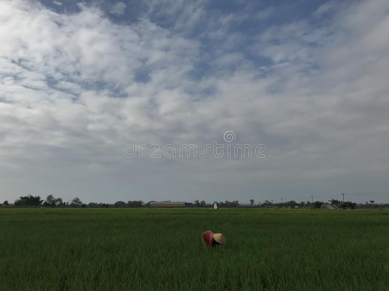 De landbouwer bij padiegebied stock foto's