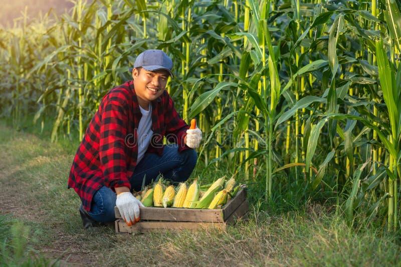 De landbouwer hief zijn duim aan suikermaïs op om zijn vertrouwen in zijn graan te tonen stock foto