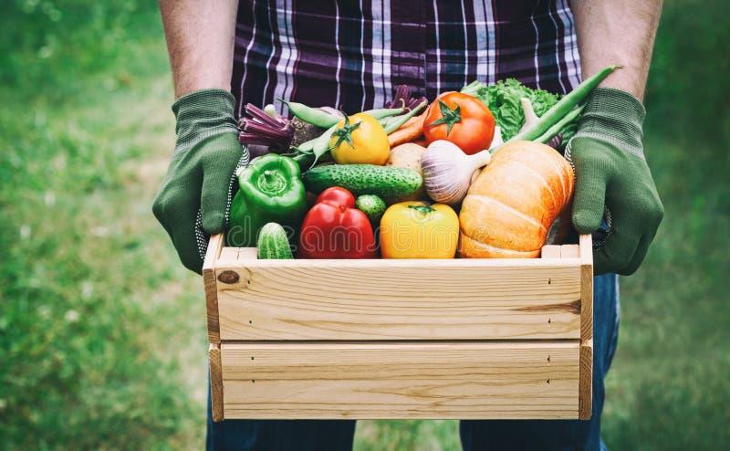 De landbouwer houdt in zijn handen een houten doos met een groentenopbrengst op de groene achtergrond Vers en natuurvoeding royalty-vrije stock fotografie