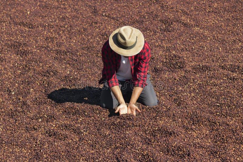 De landbouwer met hoed die zich op droge koffie bevinden, die droge koffieboon houden, roosterde koffieboon op de achtergrond, se royalty-vrije stock afbeeldingen