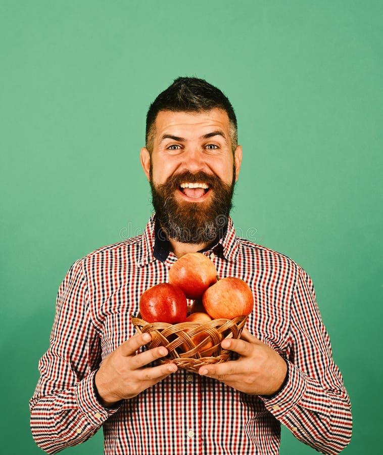 De landbouwer met vrolijk gezicht houdt rode appelen Het tuinieren en gewassen stock afbeelding