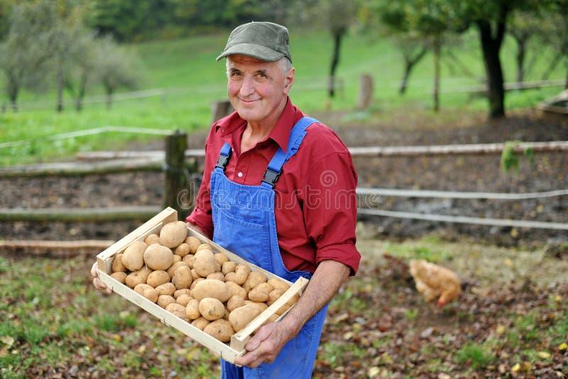 De gelukkige landbouwer toont zijn organische aardappel royalty-vrije stock afbeelding
