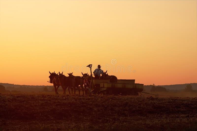 De Landbouwer van Amish bij Zonsondergang royalty-vrije stock fotografie