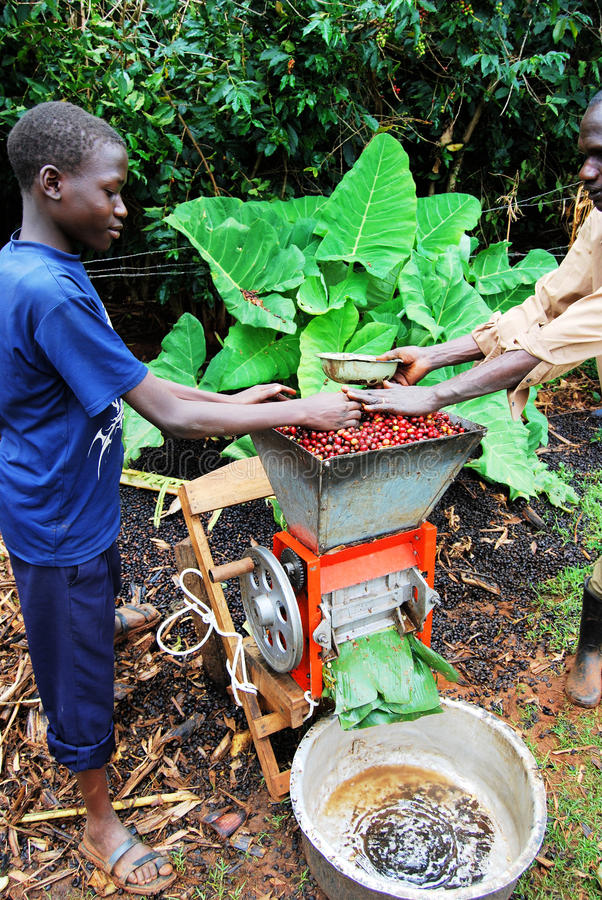 De landbouwer van de koffie stock afbeeldingen