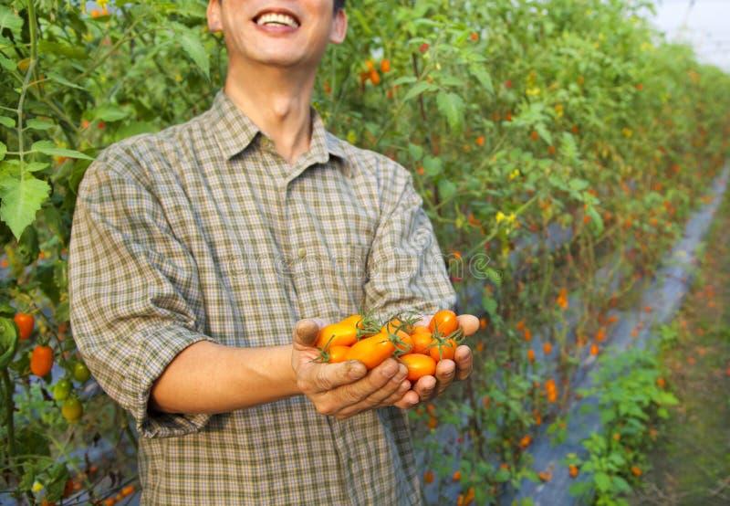 De landbouwer van de tomaat stock afbeeldingen