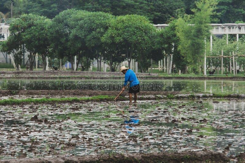 De landbouwers graven de grond stock fotografie