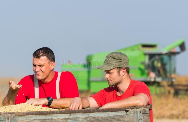 De landbouwers onderzoeken sojaboon in aanhangwagen na oogst royalty-vrije stock fotografie