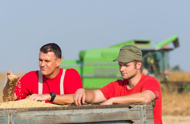 De landbouwers onderzoeken sojaboon in aanhangwagen na oogst stock afbeeldingen