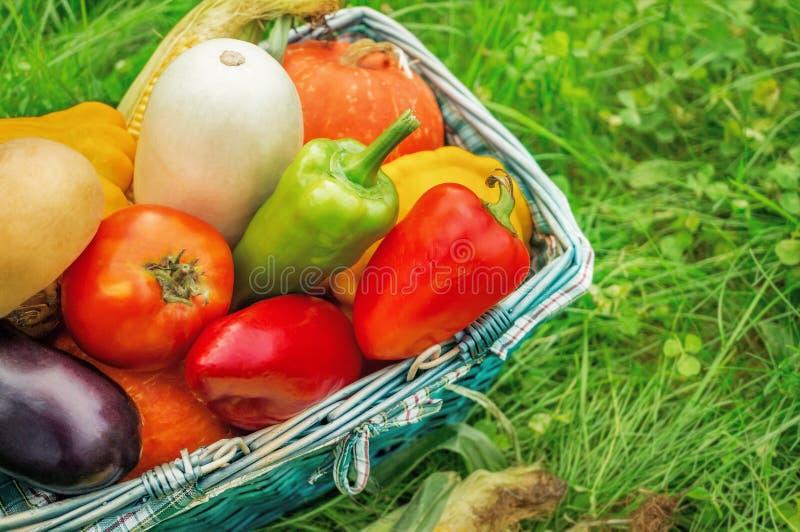 De landbouwers oogsten verschillende groenten in de recente zomer in de organische tuin Gezond, duurzaam voedsel De herfst royalty-vrije stock afbeeldingen