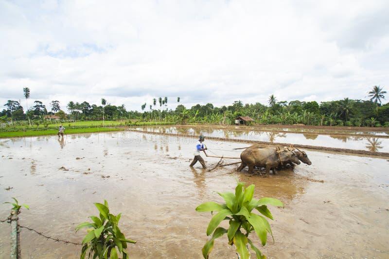 De landbouwers ploegen de Gebieden stock fotografie