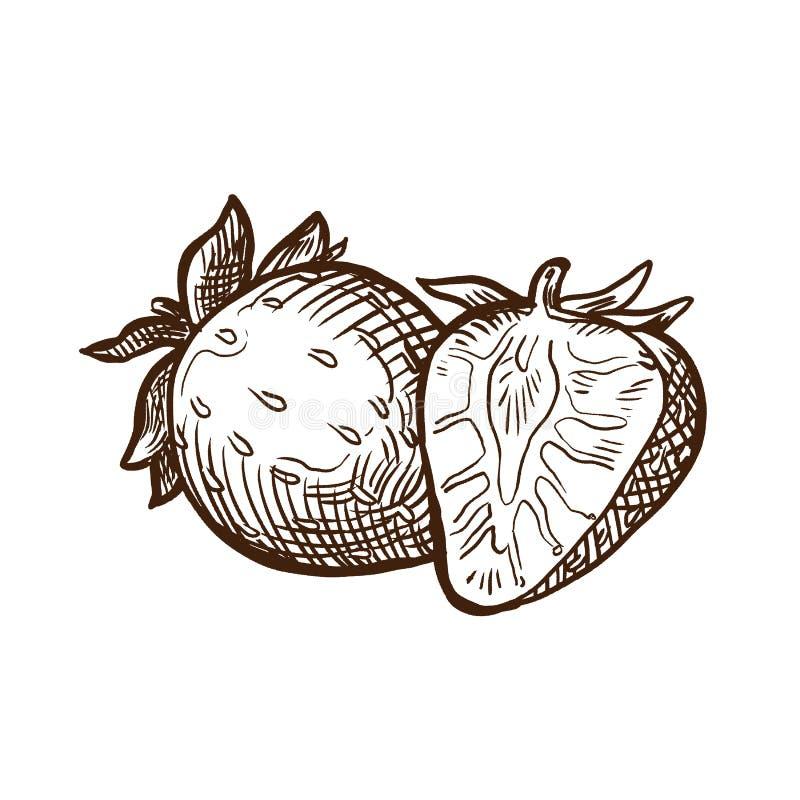 De Landbouwers` s verse groenten en vruchten van de de herfstoogst Aardbei Zoet fruit stock illustratie
