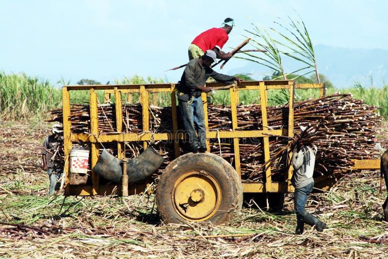 De landbouwers van Dominicanen stock foto's