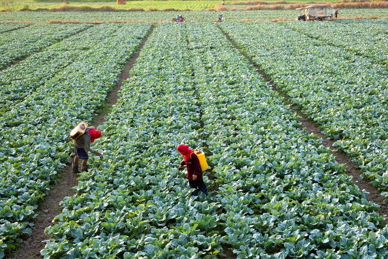 De landbouwers werken royalty-vrije stock foto