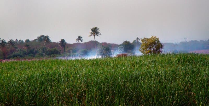 De landbouwgebieds inwhere gebieden worden bijgewerkt met het branden stock fotografie