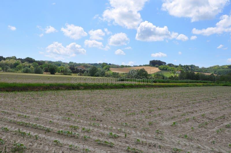 De landbouwgrond geplante sojabonen van Italië stock fotografie