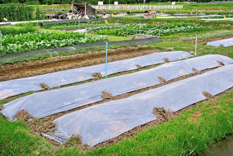 De landbouwindustrie royalty-vrije stock afbeelding