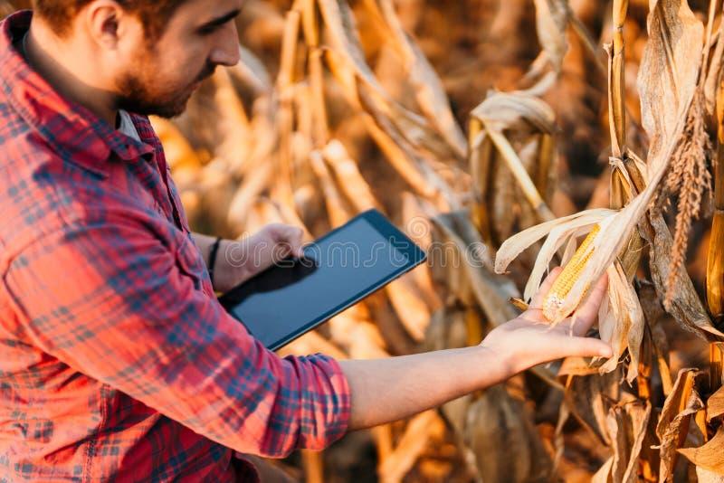De landbouwindustrie - Mensen die technologie in landbouw gebruiken Details van oogst stock afbeelding