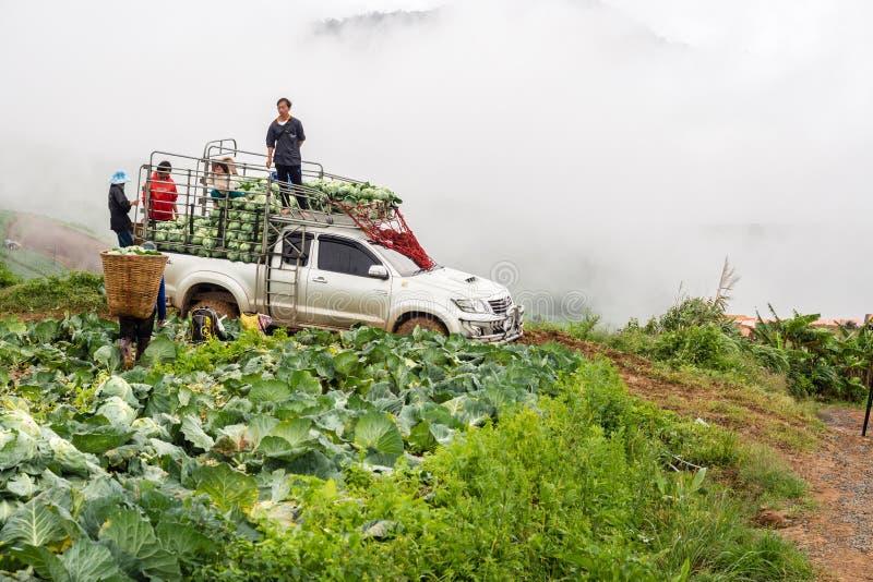 De landbouwkundigen oogsten kolen stock foto's