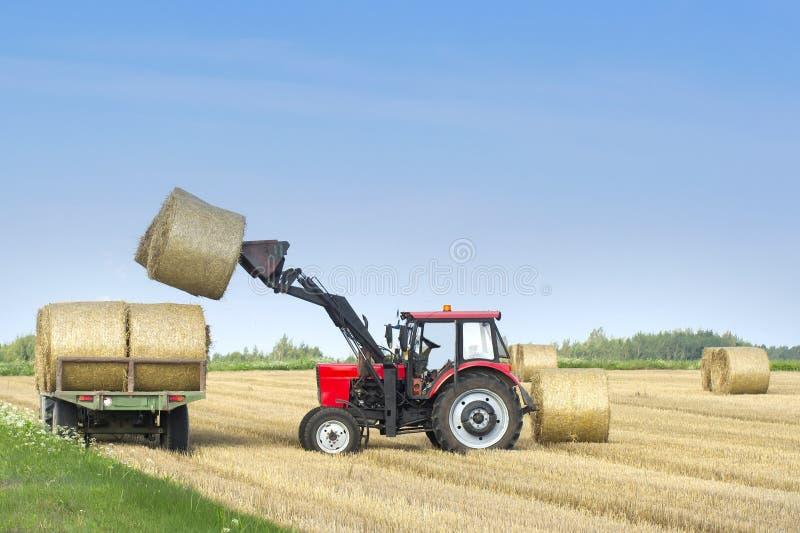 De landbouwmachines een tractor verwijderen hooibalen uit het gebied na het oogsten van tarwe Oogst op het gebied stock foto