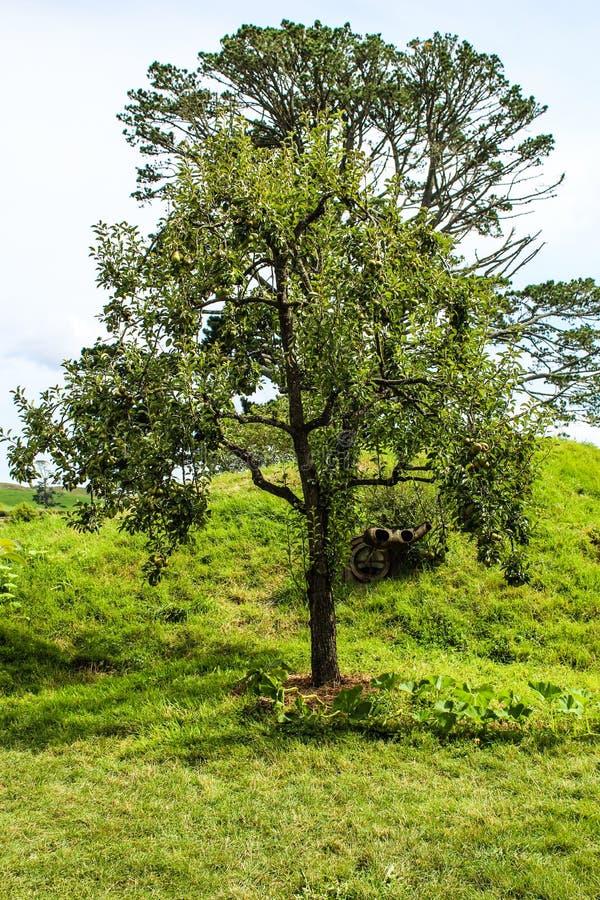 De landelijke bomen van Nieuw Zeeland stock foto's