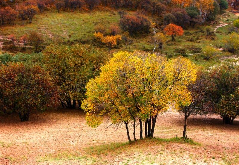 De landschappen van de herfst royalty-vrije stock foto's
