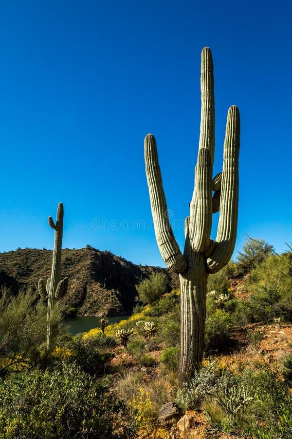 De Landschappen van het Apachemeer in Arizona stock afbeeldingen