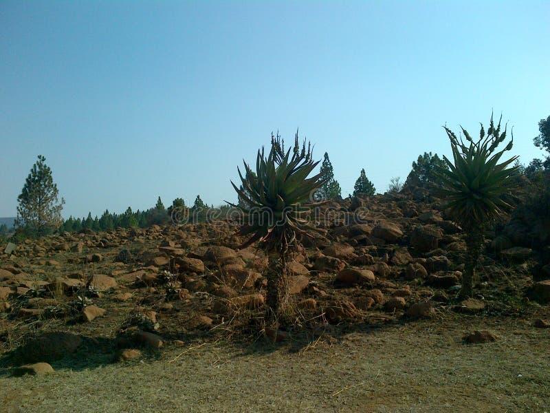 De landschapscactus schommelt bomen en droog de winterland royalty-vrije stock afbeelding