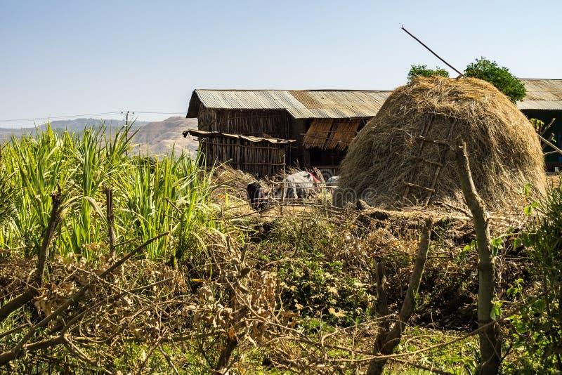 De landschapsmening dichtbij de Blauwe Nijl valt in Amara gebied van Ethiopië, Afrika stock foto