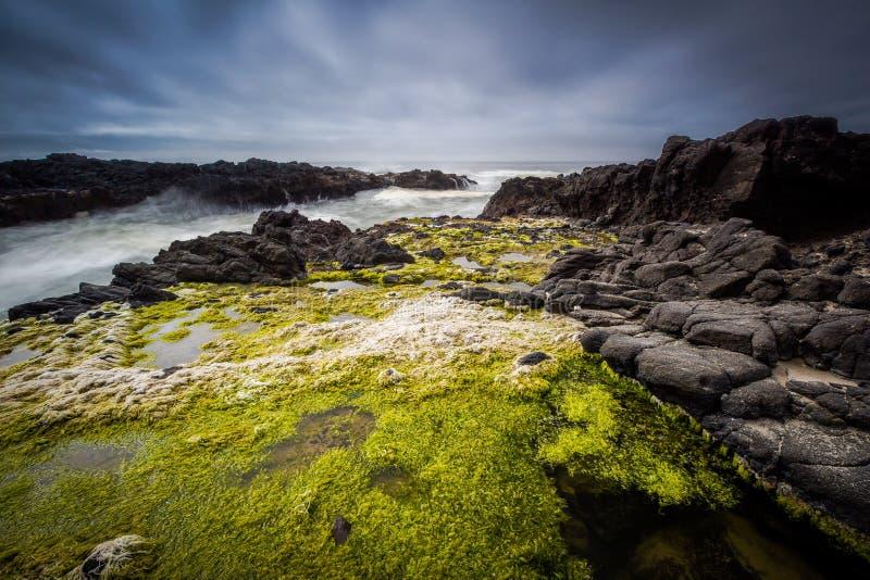 De Landtongen van de kust - Oregon royalty-vrije stock foto's