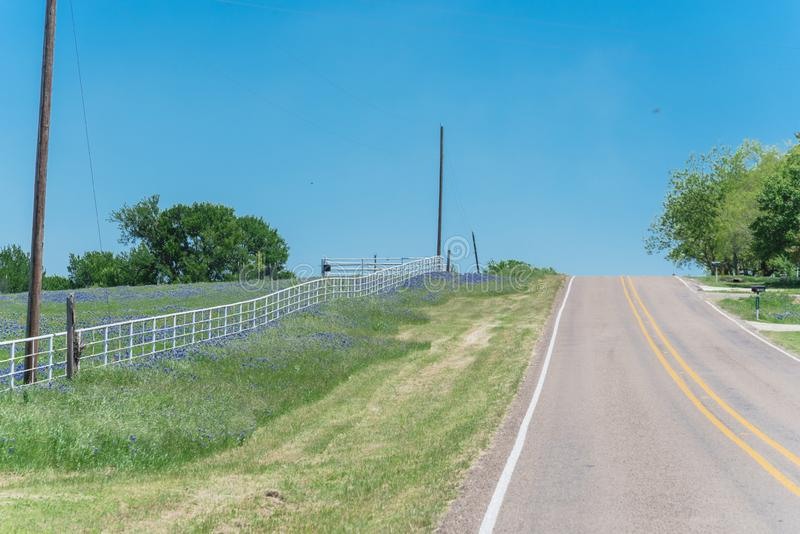 De landweg leidt tot horizontaal met de volledige bloesem van het bluebonnetgebied langs witte omheining royalty-vrije stock afbeelding