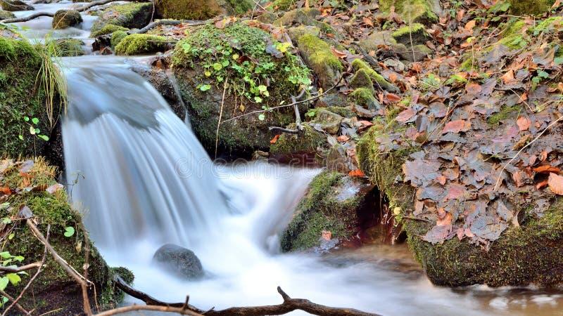 De lange boswaterval van de blootstellingsherfst royalty-vrije stock afbeeldingen