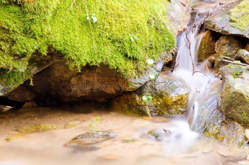De lange boswaterval van de blootstellingszomer stock foto's