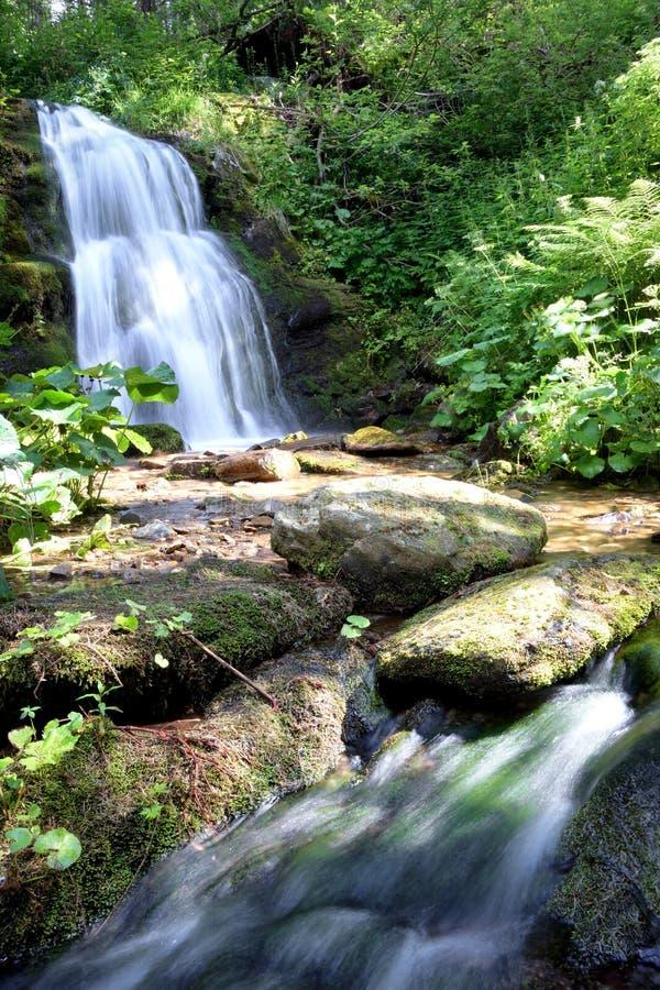 De lange waterval van de blootstellingszomer in bos royalty-vrije stock afbeelding