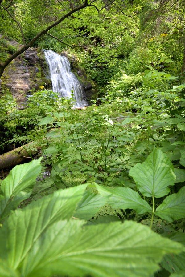 De lange waterval van de blootstellingszomer in bos stock afbeeldingen
