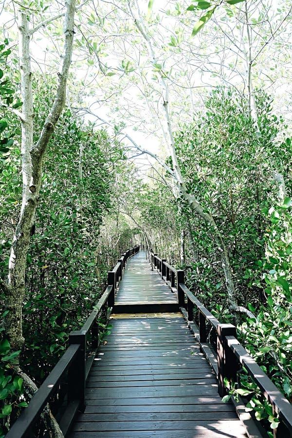 De Lange weg onder het Bos stock foto