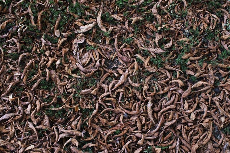 De langzaam verdwenen kastanje gaat ter plaatse weg De achtergrond van het de herfstgebladerte Gefiltreerd beeld royalty-vrije stock foto's