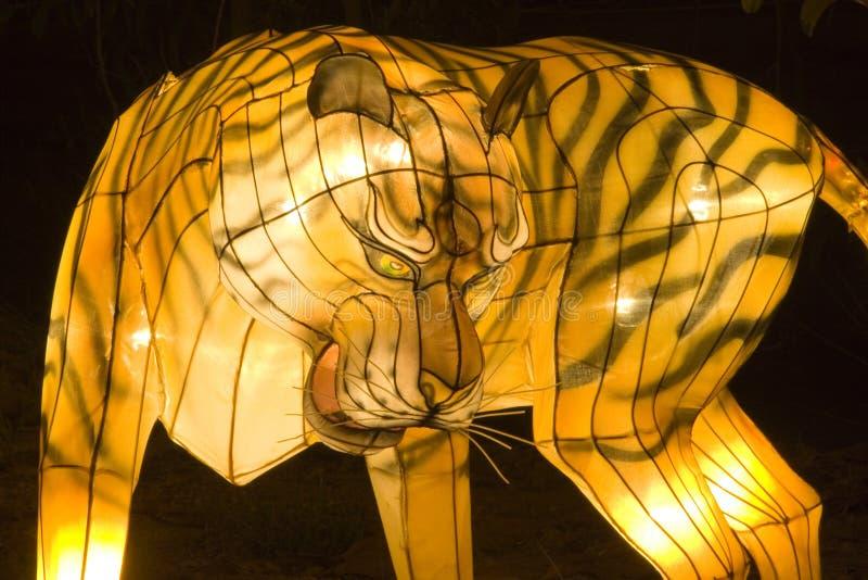 De Lantaarn van de tijger stock afbeelding