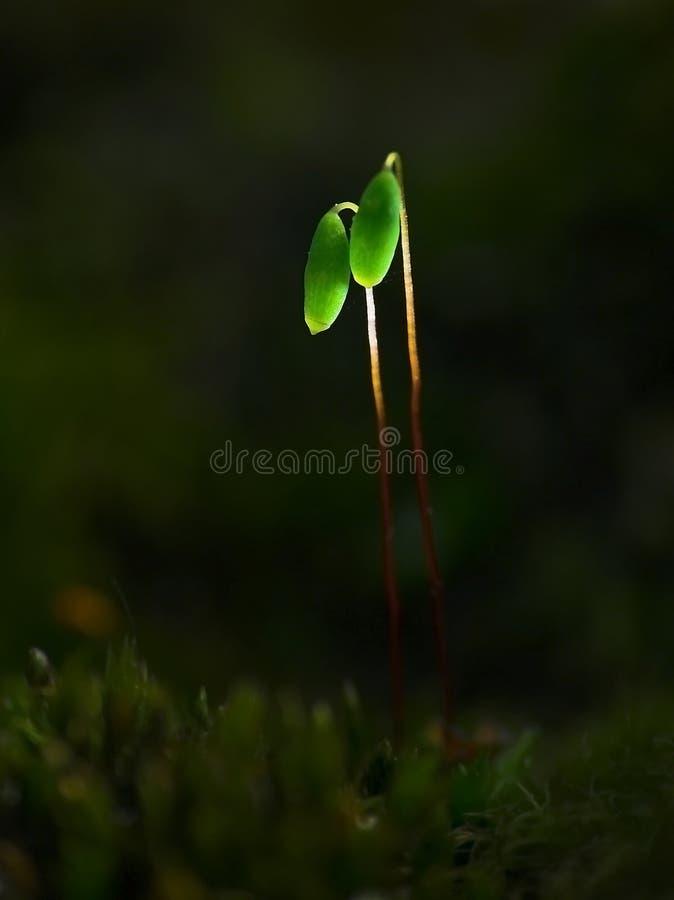 De lantaarns van het mos stock fotografie