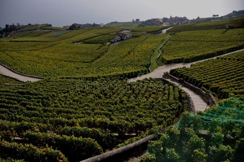 De Lavaux vingårdarna och terrasserna på sjöGenève royaltyfria bilder