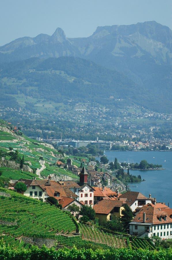 De Lavaux-wijngaarden in Zwitserland stock foto