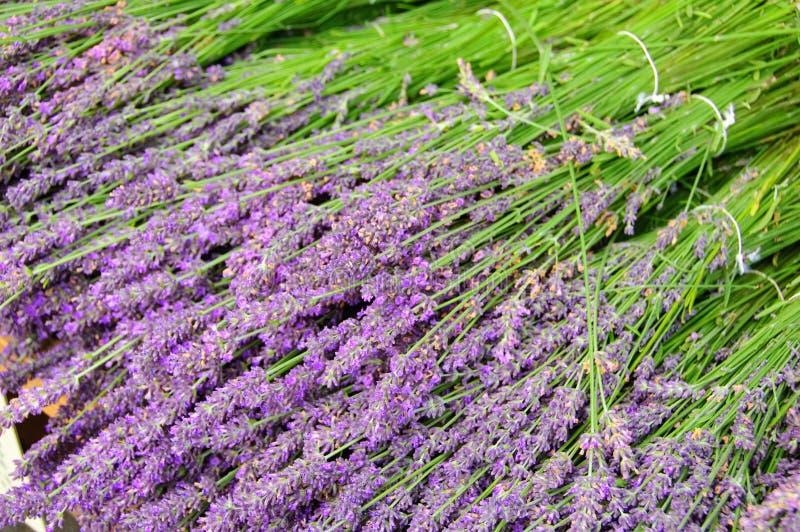 De lavendel stock afbeeldingen
