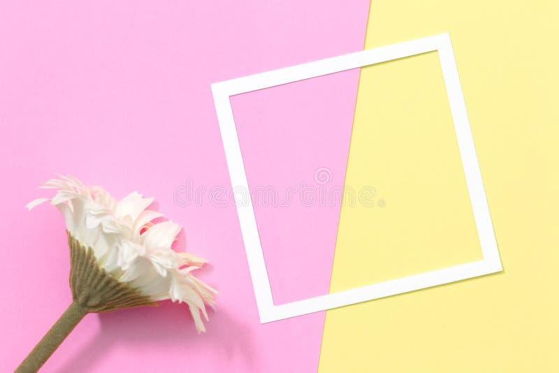 De lege kader en bloemvlakte legt op pastelkleurachtergrond met exemplaarruimte royalty-vrije stock afbeelding