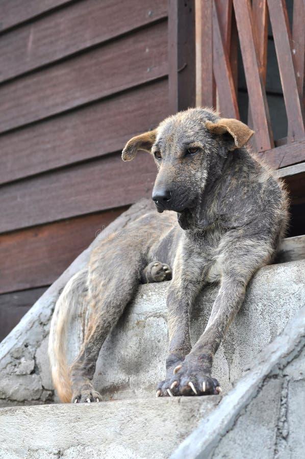 De lelijke Hond zit Thailand royalty-vrije stock foto's